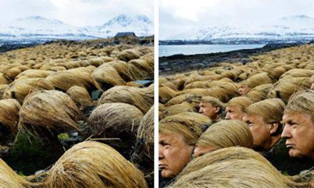 TOP 7 fotek: celý svět se baví vlasy Donalda Trumpa