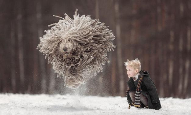 Tento obrovský chlupatý pes hrající si s malým klukem vám zlepší náladu