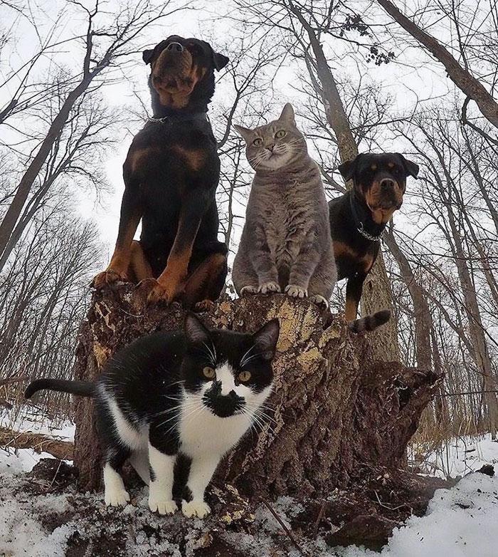 10 božích skupinových fotek zvířat, které vám zlepší náladu