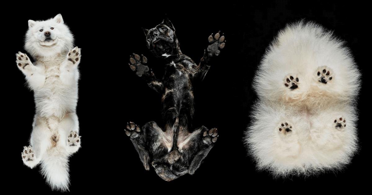 Mladý umělec fotí psy zespoda