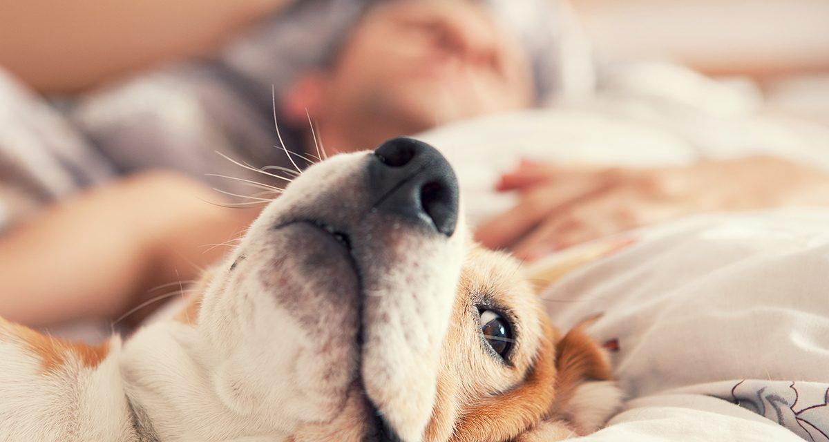 7 překvapivých důvodů, proč spát v posteli se psem